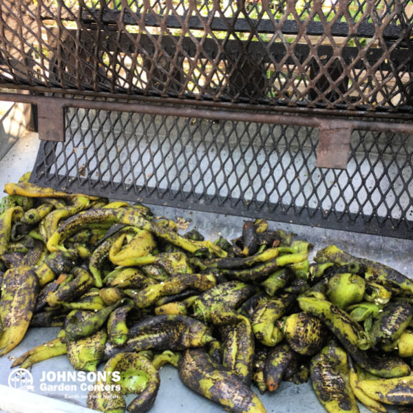 You have a nice lawn, but can you cook with green chile?