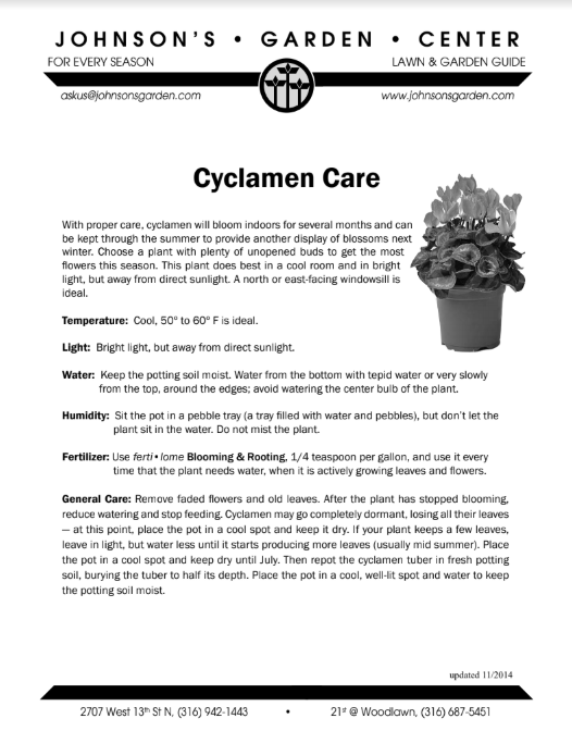 Cyclamen Care - Winter & Holiday Tips - Gardening Tips